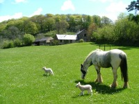 Somerset Farm self catering